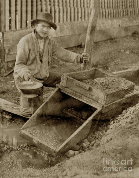 Photograph -  Placer Mining In Columbia, Tuolumne County. The Rocker. by California Views Archives Mr Pat Hathaway Archives