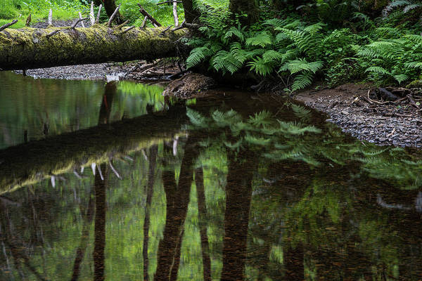 Photograph - Placid Mountain Stream by Robert Potts