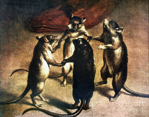 Photograph - Plague: Dance Of The Rats by Granger