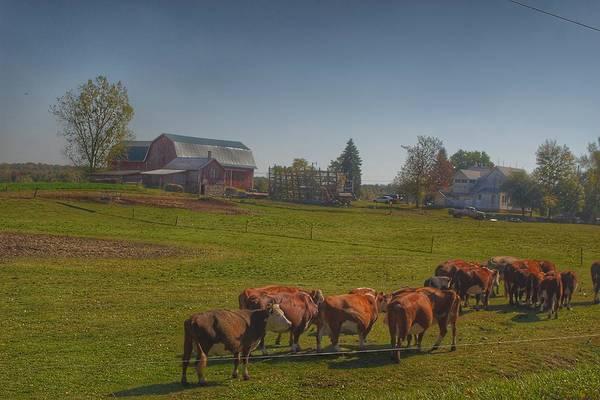 1014 - Plain Road Farm And Cows I Art Print