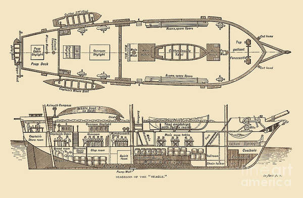 Aft Photograph - Plan Of The Hms Beagle, 1832 by Science Source