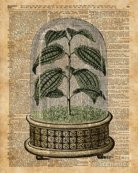 Wall Art - Digital Art - Plant Under Bell-glass Vintage Illustration Over A Old Dictionary Page  by Anna W