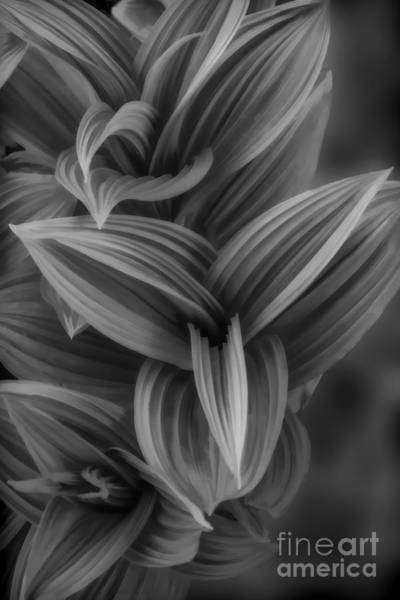 Photograph - Plant With Large Leaves by Dan Friend
