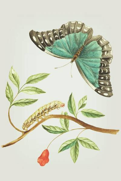 Mixed Media - Plant With Leaves And Flower Caterpillar And Butterfly By Cornelis Markee 1763 by Cornelis Markee