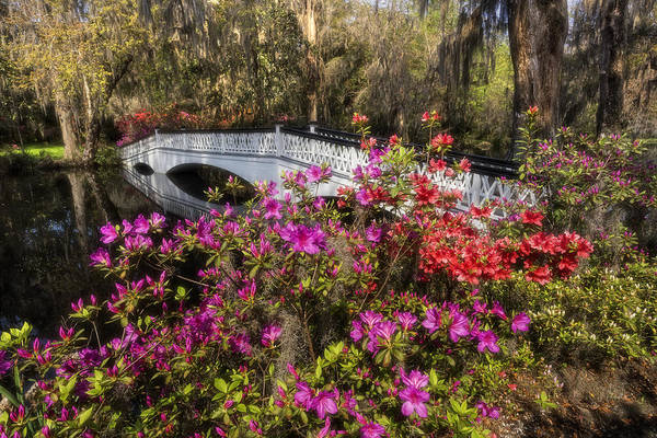 Photograph - Plantation Azalea Bridge by Ken Barrett