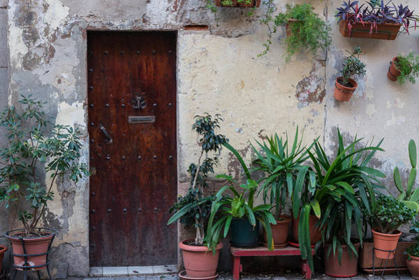 Photograph - Plants And Door by Gary Lengyel