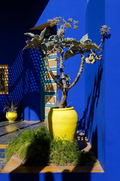 Photograph - Plants And Majorelle Blue by Aivar Mikko