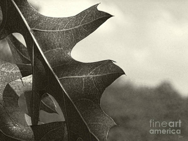 Photograph - Platinum Leaves 3 by Jeff Breiman