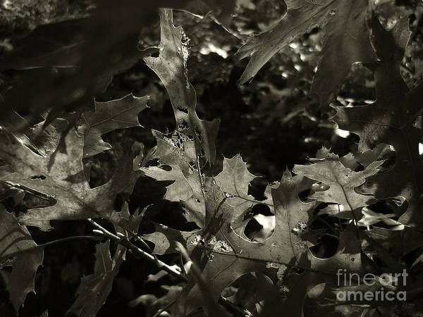 Photograph - Platinum Leaves 4 by Jeff Breiman