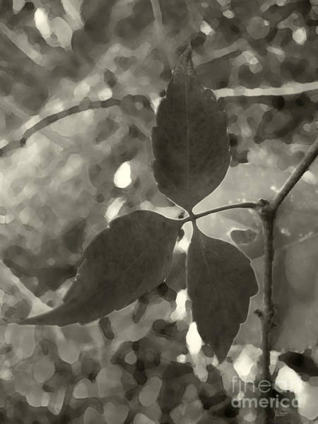 Photograph - Platinum Leaves 6 by Jeff Breiman