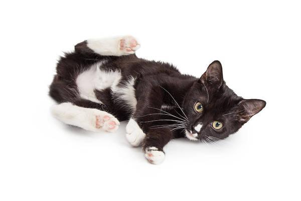 Wall Art - Photograph - Playful Kitten With Back Legs Up by Susan Schmitz