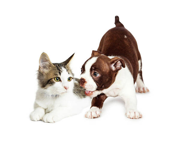 Wall Art - Photograph - Playful Puppy And Annoyed Kitten by Susan Schmitz