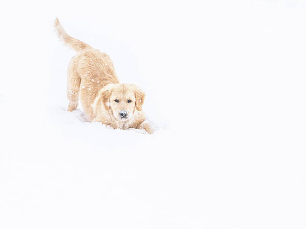 Playful Puppy In So Much Snow Art Print