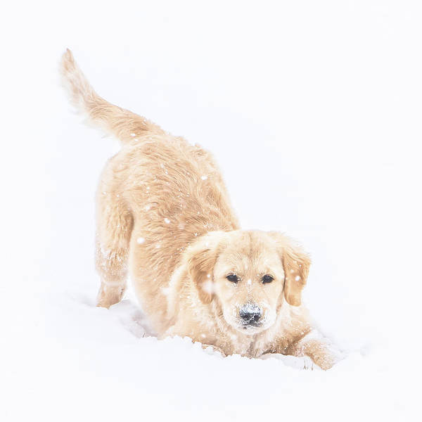Photograph - Playful Puppy by Jennifer Grossnickle