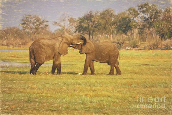 Photograph - Playing Elephants Sketch by Kay Brewer