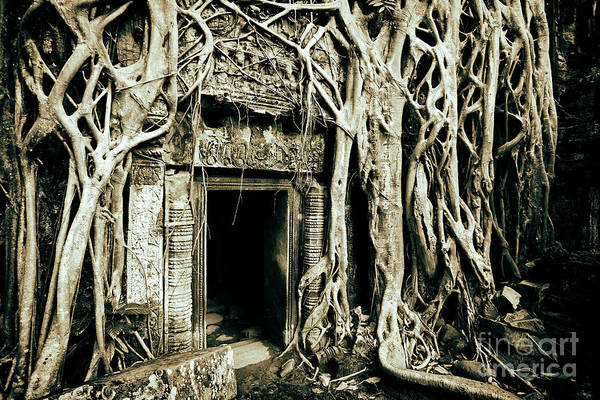 Photograph - Playing Indiana Jones At Ta Prohm Temple, Angkor Archaeological Park, Cambodia, Southeast Asia by Sam Antonio Photography