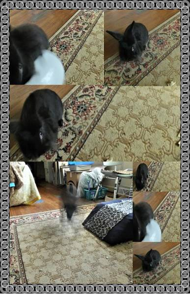 Photograph - Playtime With Bunny by Denise F Fulmer
