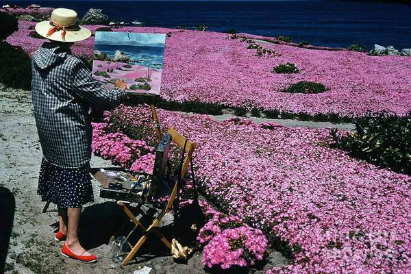 Photograph - Plein Air Artist Painting The Pink Carpet Of Mesembryanthemum Flowers 1960 by California Views Archives Mr Pat Hathaway Archives