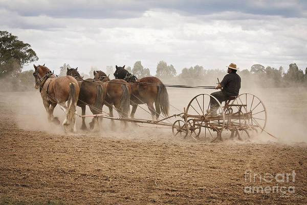 Plow Horses Photograph - Ploughing The Field by Linda Lees