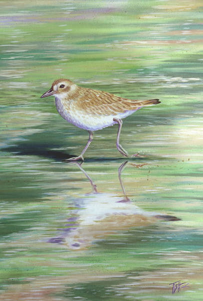 Plover Reflections Art Print