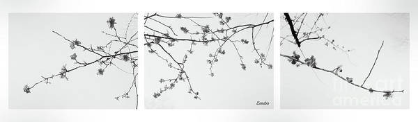 Photograph - Plum Blossoms  by Eena Bo
