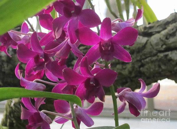 Photograph - Plum Orchids by Kathie Chicoine