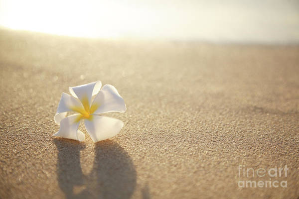 Wall Art - Photograph - Plumeria On Beach I by Brandon Tabiolo - Printscapes