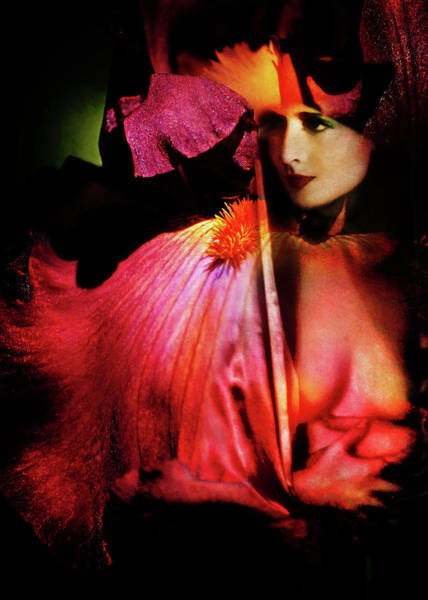 Photograph - Plumes Of Paradise by Rebecca Sherman