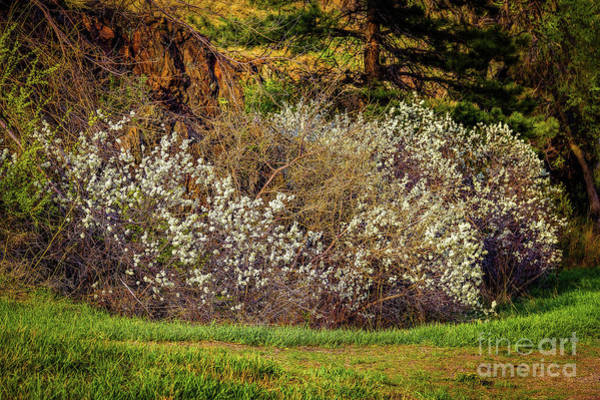 Photograph - Plums by Jon Burch Photography