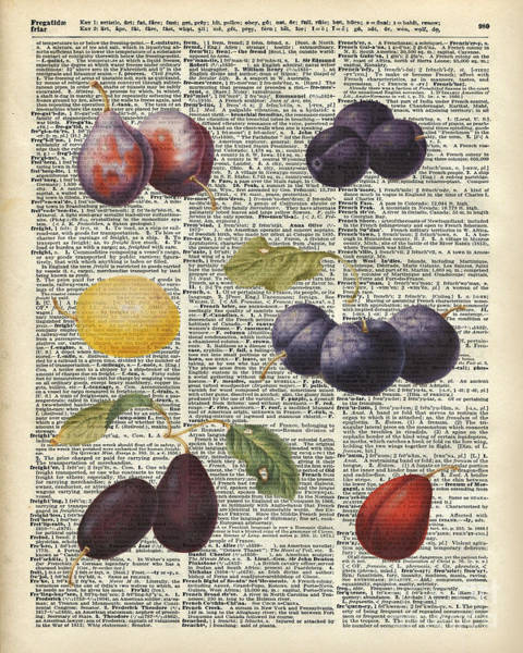 Vintage Painting - Plums Vintage Illustration Over A Old Dictionary Page by Anna W
