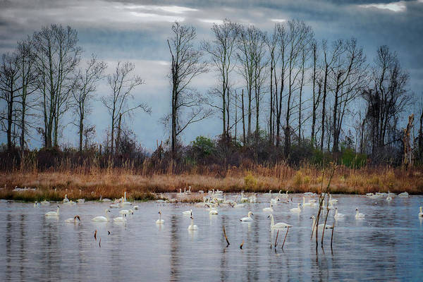 Photograph - Pocosin Lakes Nwr by Donald Brown