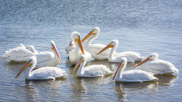 Photograph - Pod Of Pelicans I by Dawn Currie