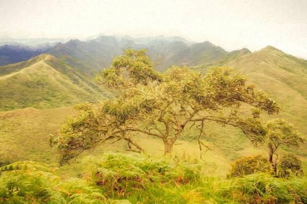 Digital Art - Podocarpus Tree by Janice Bennett