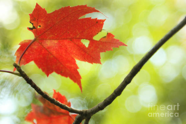 Wall Art - Photograph - Poesie D'automne  by Aimelle