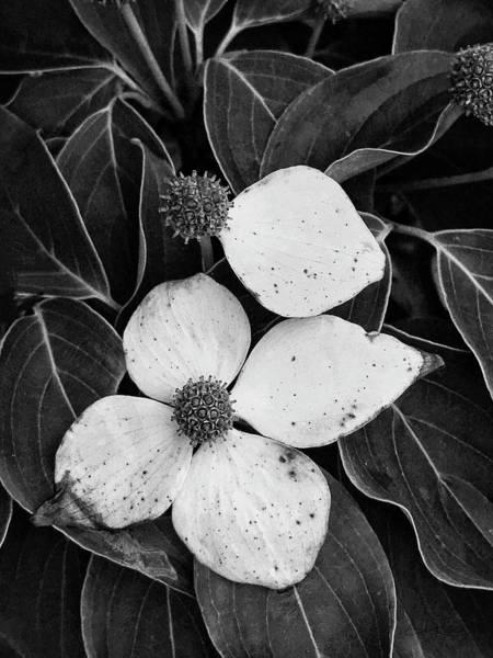 Photograph - Poetic Symmetry by Jill Love