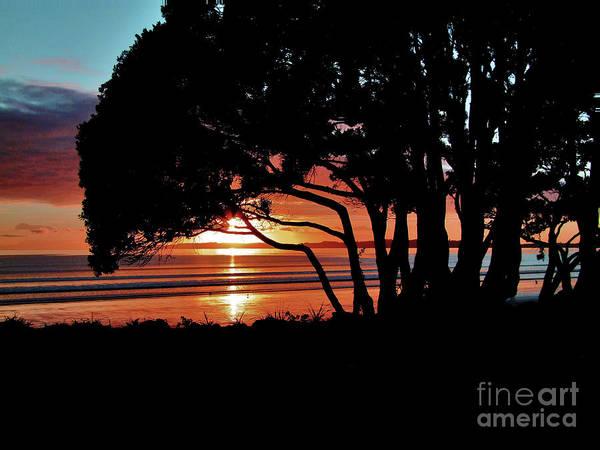 Norfolk Pine Wall Art - Photograph - Pohutakawa Sunrise by Karen Lewis