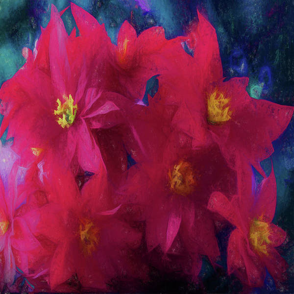 Digital Art - Poinsettia Abstract by OLena Art Brand