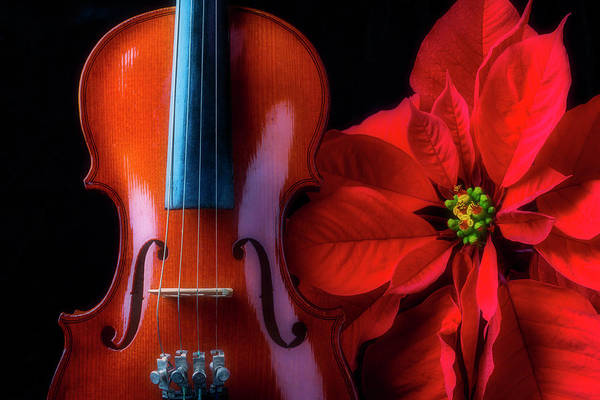 Foilage Photograph - Poinsettia And Violin by Garry Gay