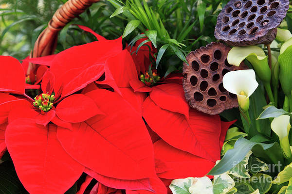 Photograph - Poinsettia Basket For Christmas by Jill Lang