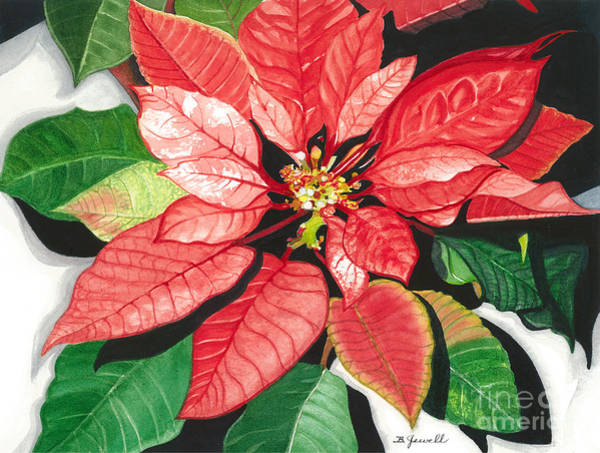 Wall Art - Painting - Poinsettia, Star Of Bethlehem by Barbara Jewell