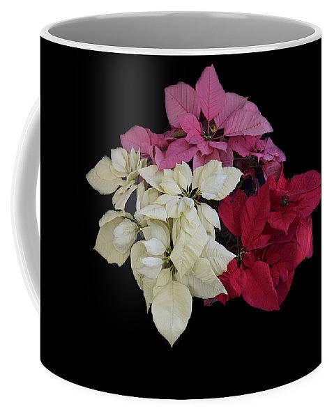 Jewelry - Poinsettia Tricolor Mug  by R  Allen Swezey