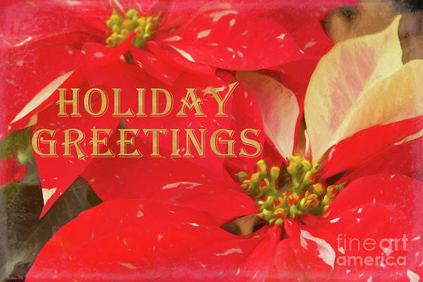 Photograph - Poinsettias Holiday Greetings by Teresa Wilson