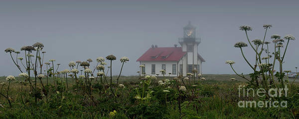 Bluehour Photograph - Point Cabrillo Light Station With Seaside Angelica by Along The Trail