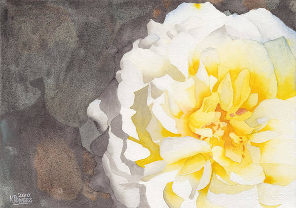 Painting - Point Defiance White Flower by Ken Powers