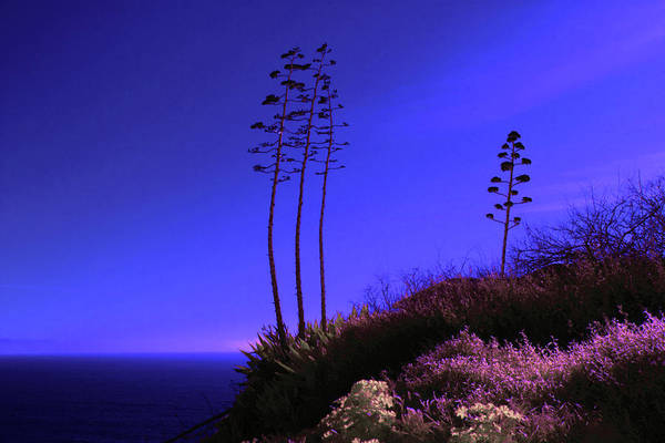 Photograph - Point Fermin In Infrared by Randall Nyhof