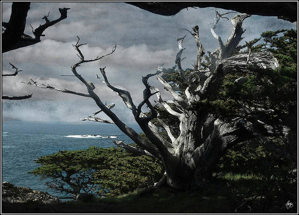 Photograph - Point Lobos Cypress by Wayne King