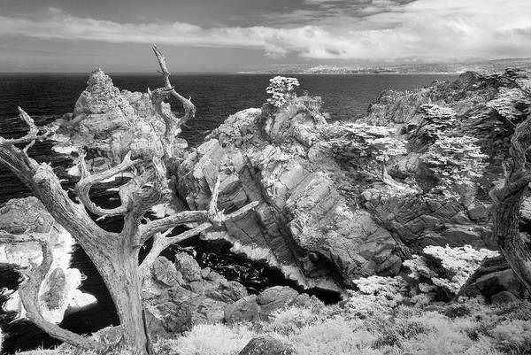 Neiman Photograph - Point Lobos Ir 0605 by Bob Neiman
