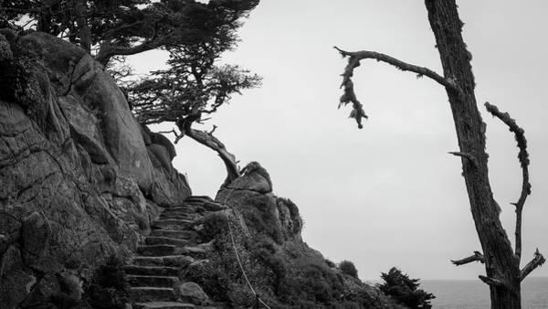 Photograph - Point Lobos Pano I Bw by David Gordon