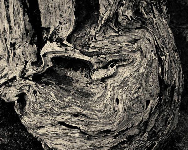 Photograph - Point Lobos Vi Toned by David Gordon