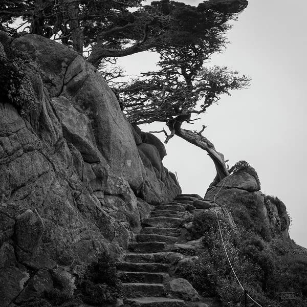Photograph - Point Lobos X Bw Sq by David Gordon